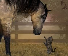 Cheval & Chat !