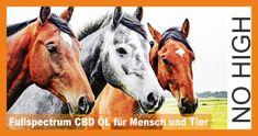 Fullspectrum CBD Öl PURE GOLD für Mensch und Tier>>>Fast 100 Jahre unterdrückt, obwohl die Kraft der Pflanze bekannt war. Informiere dich jetzt.... Horses, Animals, Plants, Animales, Animaux, Animal, Animais, Horse