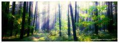 Nature's Kingdom by `werol.