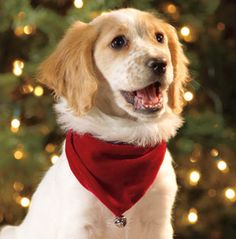I always wanted a dog and I always wished I would get one for Christmas. It would be a Christmas miracle.