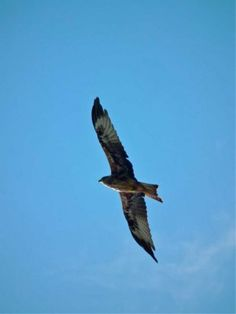 Red Kites were released on the Harewood estate in 1999 as part of a UK conservation initiative. Harewood Estate was originally part of a partnership involving… Harewood House, Red Kite, England And Scotland, Kites, Bird Species, Bird Houses, Bald Eagle, Conservation, Palace