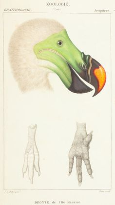 Science or Art? Beautiful Illustrations of Animals From 170 Years Ago. I'd say science and art. Links to larger versions for framing or wallpaper.