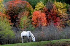 a horse in autumn
