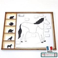 Shoe Rack, Montessori, Zoology, Botany, Exercises, Animaux, Shoe Racks