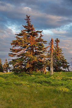 """Sunset Trees"" photo by Ren Kuljovska Conneaut Lake, Photo Tree, Photos For Sale, Beautiful Lights, Nature Photography, Fine Art Prints, Trees, Design Inspiration, Christmas Tree"