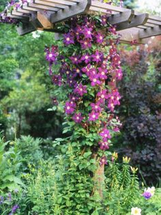 This perennial clematis adds color and texture to vertical spaces and blooms in almost every color. http://www.bhg.com/gardening/trees-shrubs-vines/vines/best-perennial-vines/?socsrc=bhgpin060113clematis=6