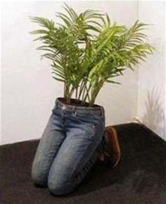 """Результаты поиска изображений по запросу """"blue jean planters"""""""