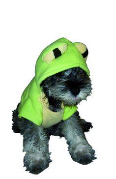 ¿Cómo se vería tu #Perro Disfrazado de rana?