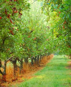'Twould love an orchard. Imagine spreading a blanket between the trees and having a picnic - or just reading a book. :)