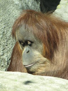 Photo taken at the Louisville Zoo (KY) by Lori A. Moore http://www.LoriBooks.com