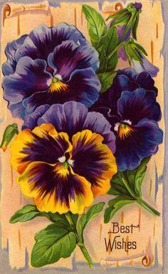 Victorian Flower♥
