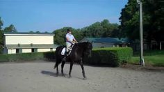 """""""Are you sure your horse is really moving its haunches or shoulders over? You are not alone. Try the Diamond exercise and you will know"""""""