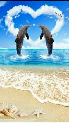 - My list of the most beautiful animals Dolphin Images, Dolphin Photos, Dolphin Painting, Dolphin Art, Beautiful Sea Creatures, Most Beautiful Animals, Beautiful Nature Wallpaper, Love Wallpaper, Photo Wallpaper