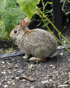 Hop On - A young bunny discovers the herb garden and has a look around.