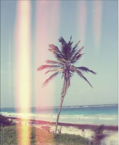 Oh me I love Palm trees! Summer Breeze, Summer Vibes, Summer Of Love, Summer Fun, Palmiers, Just Dream, Summer Feeling, Beautiful World, Beautiful Gardens