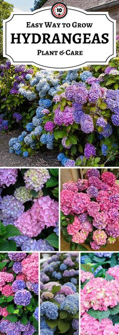 10 tips for hydrangeashttp://www.topinspired.com/top-10-tips-on-how-to-plant-grow-and-care-for-hydrangeas/