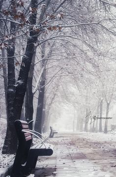First Snow :-)  by Adel Maghsoodi on 500px
