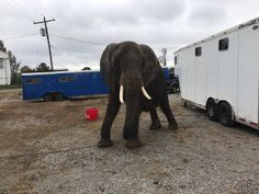 Judge gives Lawrence County custody of Nosey the elephant: she will now remain in a Tennessee sanctuary http://whnt.com/2018/01/22/judge-gives-lawrence-county-custody-of-nosey-the-elephant/