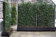 https://www.google.com/search?q=grow ivy in trough