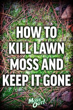 Lawn care weeds - Remove unsightly lawn moss from your yard and enjoy thick, green grass with these simple tips Grass Weeds, Weeds In Lawn, Moss Grass, Green Lawn, Green Grass, Lawn Problems, Moss Lawn, Mousse, Growing Grass