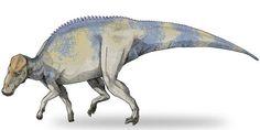 Reconstrução do dino que passou pela análise molecular - (cientistas encontraram restos de carne)