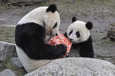 Panda Christmas by Josef Gelernter on 500px