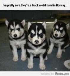 I M Pretty Sure The Are A Black Metal  #Funny-Pics http://www.flaproductions.net/funny-pics/i-m-pretty-sure-the-are-a-black-metal/20280/?utm_source=PN&utm_medium=http%3A%2F%2Fwww.pinterest.com%2Falliefernandez3%2Fgreat%2F&utm_campaign=FlaProductions