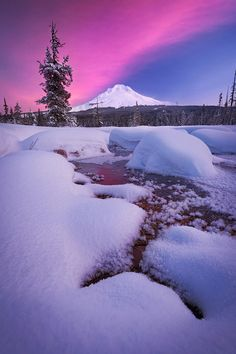 Winter Meadow, Mount Hood by Michael Bollino
