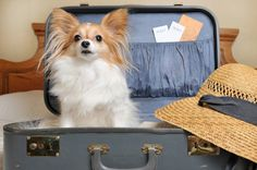 Top 6 Pet-friendly hotels in the US