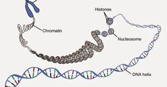 Technology Catches Up Mitochondrial Dna, Scientific Journal, Ancestry Dna, Anatomy And Physiology, Dna Test, June, Product Launch, Content