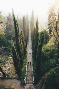 Brick steps and trees // Verona, Italy