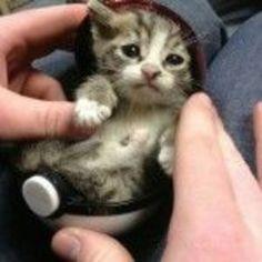 ねこ|おじゃかんばん『キュートな猫の写真日記』