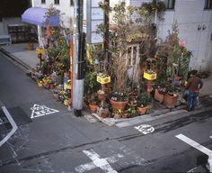 Freunde von Freunden — Azuma Makoto — Flower Artist, Store, Minami Aoyama, Tokyo — http://www.freundevonfreunden.com/slider/azuma-makoto/