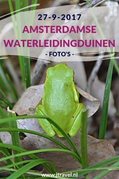 Op 27 september 2017 maakte ik een wandeling in de Amsterdamse Waterleidingduinen. Ik liep vanaf de ingang Panneland en ging opnieuw op zoek naar vossen. Ik heb deze dag verschillende vossen, boomkikkers, damherten en paddenstoelen gespot en genoot van de schitterende natuur. Kijk je mee wat ik allemaal zag? #awd #amsterdamsewaterleidingduinen #vos #vossen #damherten #boomkikkers #paddenstoelen #wandelen #hiken #natuur #jtravel #jtravelblog #fotos