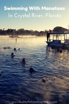 Learn about manatees and their environment as you swim with these gentle giants in Crystal River, Florida. via @BuddyTTMonkey