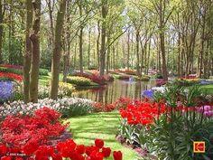 Keukenhof Palace Garden, Holland