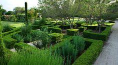 faux labyrinthe et plantes hirsutes