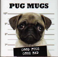 Todo sobre el perro Pug (Megapost) - Taringa!