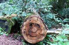 Forest Faces Tree Faces | Its another tree with a face !