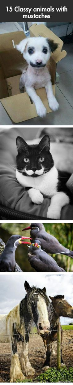 Classy animals with mustaches… and how cute is the puppy