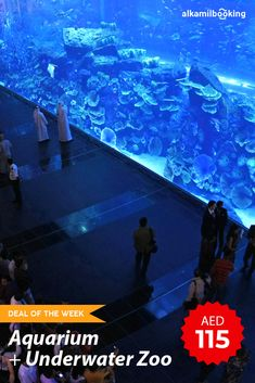 Visit the largest🤩😍 suspended aquarium on Earth - the Dubai Aquarium in The Dubai Mall. With a capacity of over 10 million liters of water, you are bound to see species of fish you have never seen before.  Know Before You Go Important Information  Government Valid ID card has to be presented for entry.  Timings  Sun - Wed: 10 AM - 11 PM  Thu - Sat: 10 AM - 12 AM  Note:  Tickets not applicable for children below 3 years of age.  #WeBuildTravel | #dealoftheweek | #DubaiAquariumtickets Middle East Destinations, Dubai Aquarium, Visit Dubai, Dubai Mall, World Religions, Uae, Underwater, Travel Inspiration, 3 Years