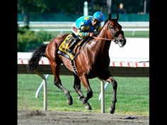 American Pharoah horse of a lifetime  HD autobiography 18 minutes YouTube