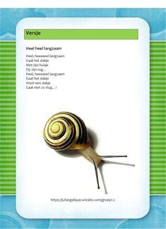 Versje: Heel heel langzaam Snail, Diy And Crafts, Preschool, Fall, Spiders, Preschools, Kid Garden, Early Elementary Resources, Kindergarten