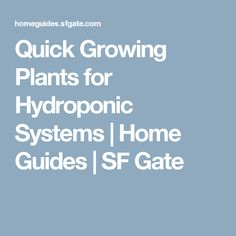 Quick Growing Plants for Hydroponic Systems | Home Guides | SF Gate