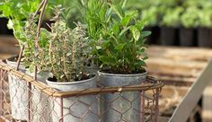 12 Herbs to grow around the coop Enhance the health of your flock with these herbs perfectly suited for the coop.