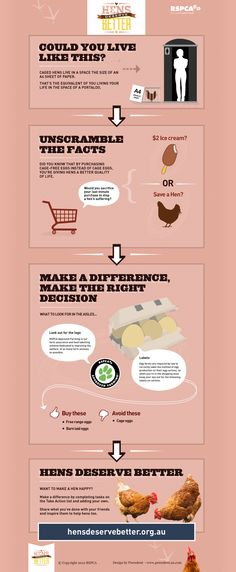 Could you live like this? Please share this infographic if you know people that still buy caged eggs, because hens deserve better. #hensdeservebetter