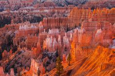 Bryce Canyon National Park, Utah | Free entry to the parks in 2016 to celebrate the centenary