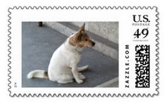 USPS approved postage stamps http://www.zazzle.com/waiting_dog_us_postage_stamps_postage_stamps-172691712374423553