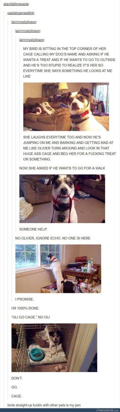 Funny tumblr post #dogsfunnytumblr