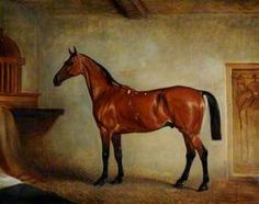 A Bay Horse in a Stable British School